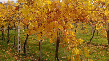 In Autunno...